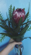the flower i am least able to resist: protea.